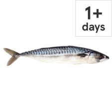 Counter Whole Mackerel
