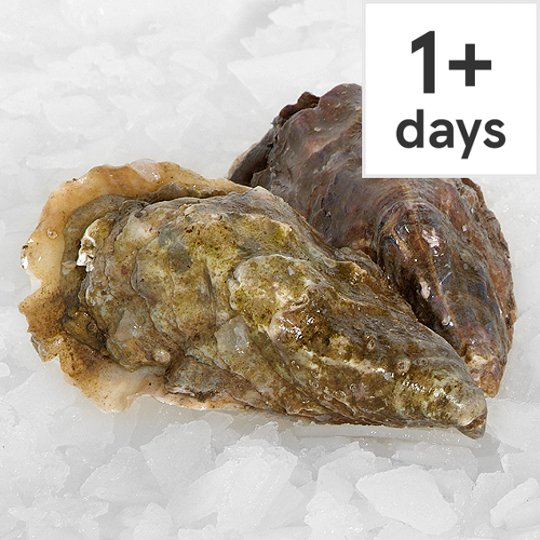 Counter Live Oysters