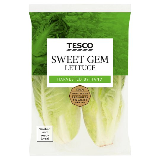 image 1 of Tesco Sweet Gem Lettuce