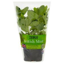 Tesco British Growing Mint Pot Each