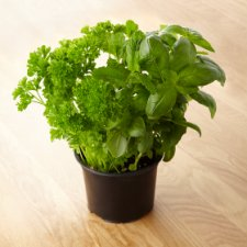 image 2 of Tesco Herb Selection Pot